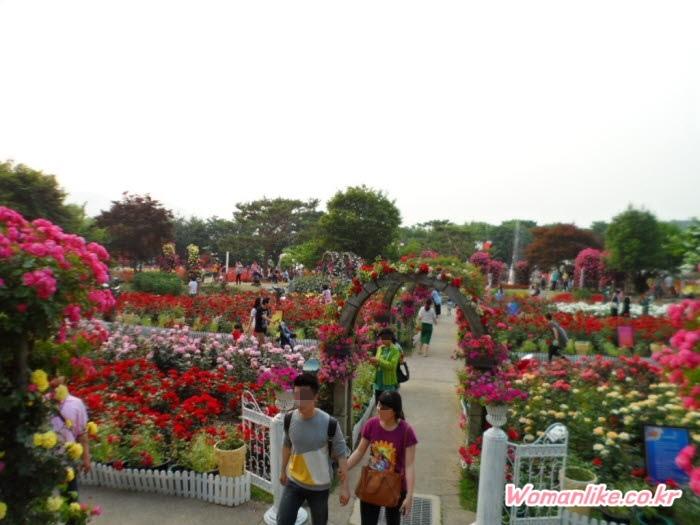 서울대공원 장미축제 장미원 (1)