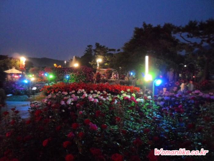 서울대공원 장미축제 장미원 (6)
