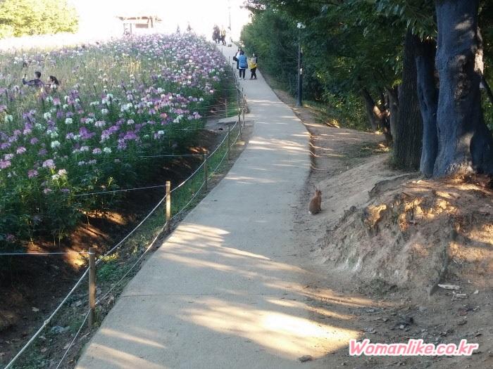 올림픽공원 풍접초