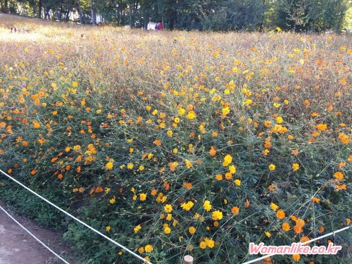 올림픽공원 들꽃마루 2