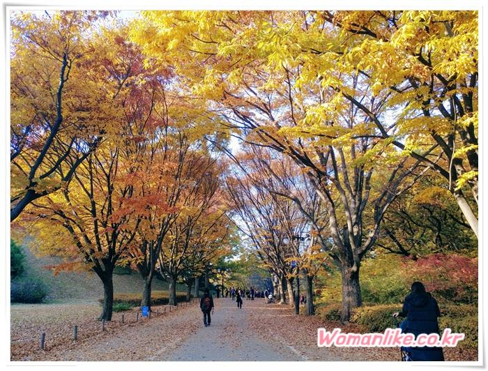 올림픽공원 가을 단풍 (1)